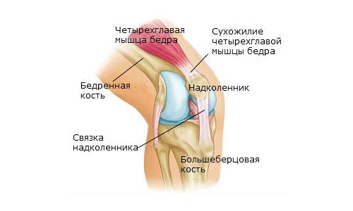 Все о коленном суставе частичное повреждение связок голеностопного сустава лечение